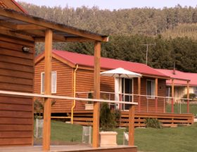 Maydena Country Cabins Accommodation  Alpaca Stud - Geraldton Accommodation
