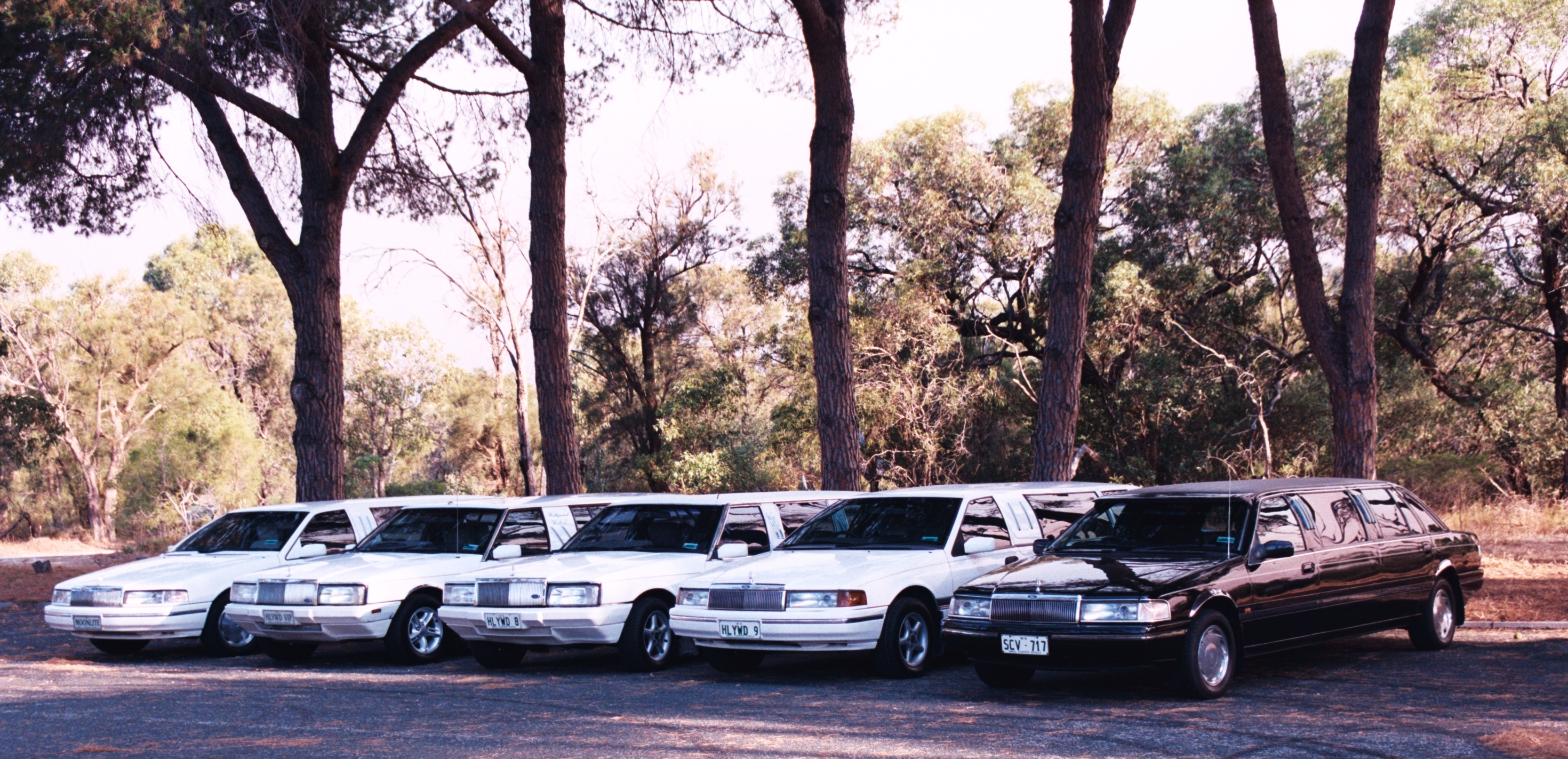 Hollywood VIP Limousines - Geraldton Accommodation