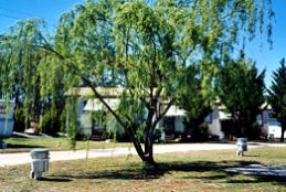 Blue Topaz Caravan Park  Camping Ground - Geraldton Accommodation