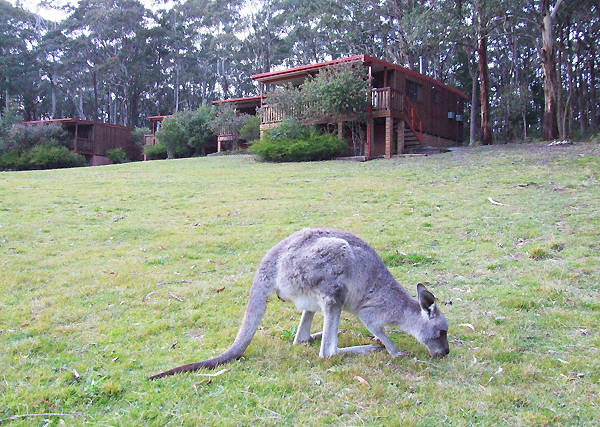 Jenolan Caves Cottages - Geraldton Accommodation