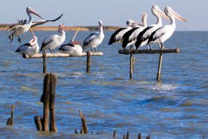 Pelican Perch Retreat - Geraldton Accommodation