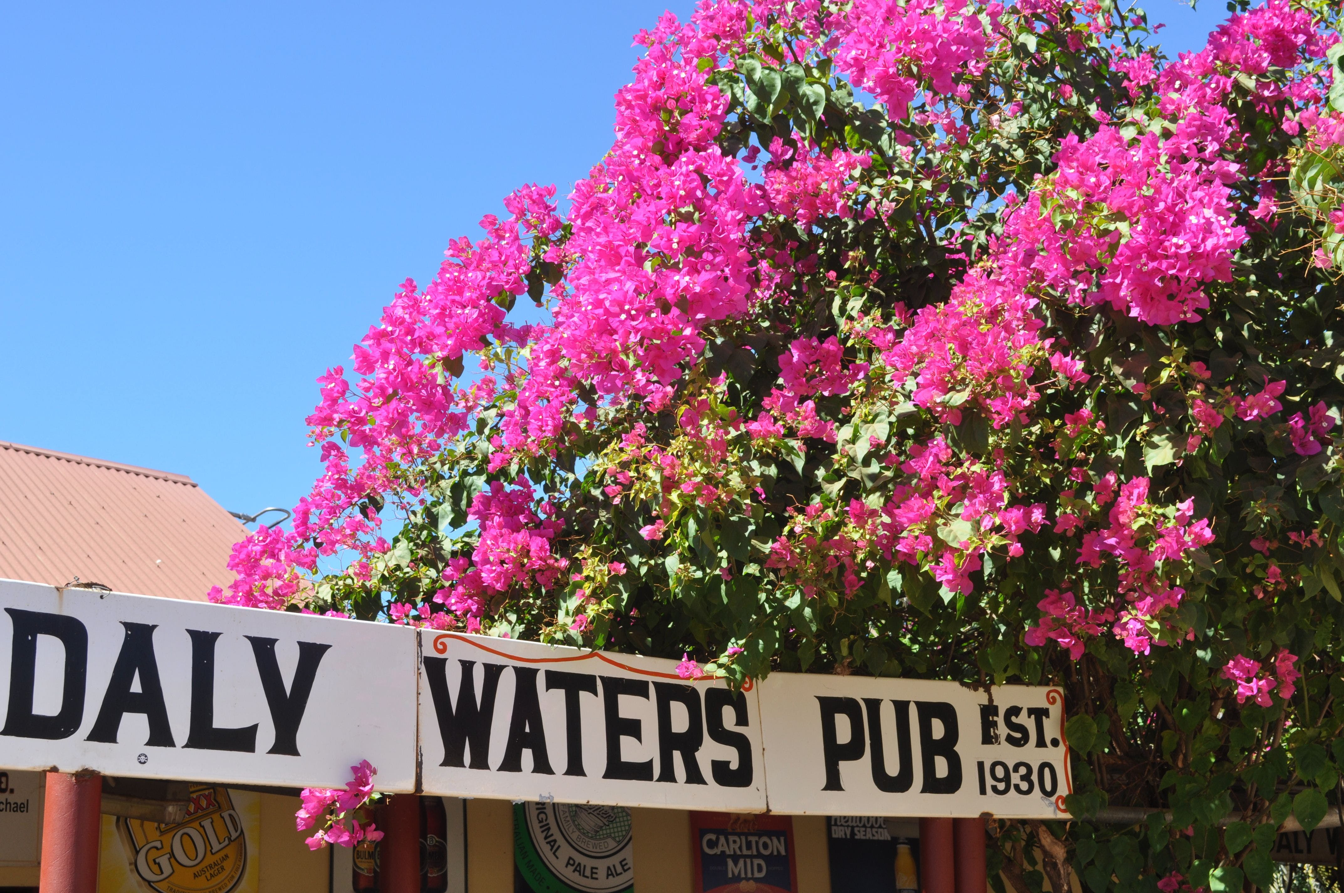 Daly Waters Historic Pub - Geraldton Accommodation