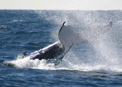 Whale Watching Sydney - Geraldton Accommodation