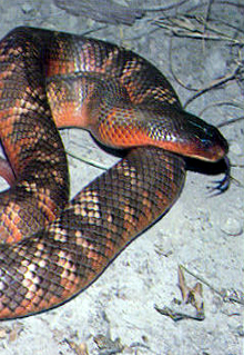 Armadale Reptile  Wildlife Centre - Geraldton Accommodation