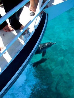 Pelican Charters - Geraldton Accommodation