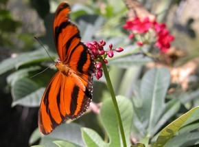 Butterfly Farm - Geraldton Accommodation
