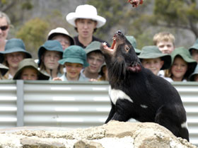 Tasmania Zoo - Geraldton Accommodation