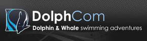 Dolphcom - Dolphin  Whale Swimming Adventures - Geraldton Accommodation
