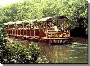 Daintree Rainforest River Trains - Geraldton Accommodation