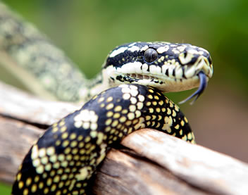 Reptile Encounters - Geraldton Accommodation