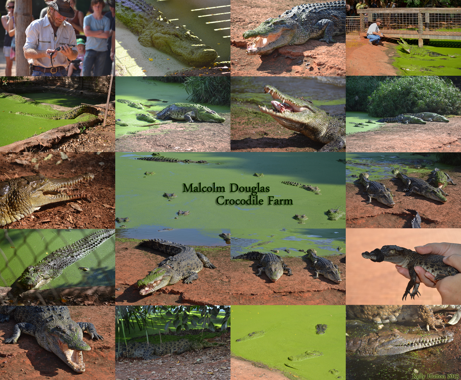 The Malcolm Douglas Crocodile Park - Geraldton Accommodation
