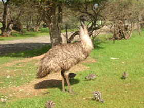 Minlaton Fauna Park - Geraldton Accommodation