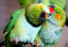 Rainbow Jungle - The Australian Parrot Breeding Centre - Geraldton Accommodation