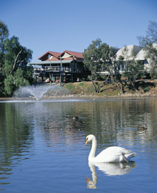 White Swans - Geraldton Accommodation