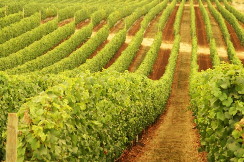 MadFish Wines Margaret River - Geraldton Accommodation