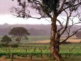 Yangarra Estate Vineyard - Geraldton Accommodation