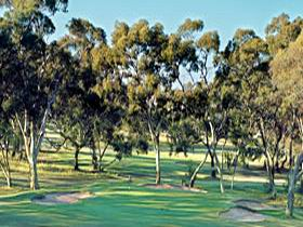 Tanunda Pines Golf Club - Geraldton Accommodation
