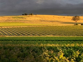 Kellermeister Wines - Geraldton Accommodation