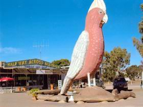 The Big Galah - Geraldton Accommodation