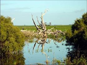 Bool Lagoon Game Reserve and Hacks Lagoon Conservation Park - Geraldton Accommodation