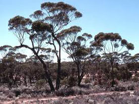 Clements Gap Conservation Park - Geraldton Accommodation