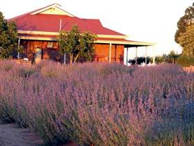 Bella Lavender Estate - Geraldton Accommodation
