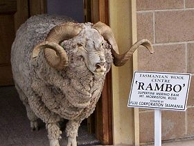 Tasmanian Wool Centre - Geraldton Accommodation