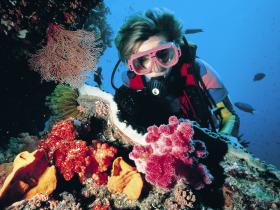 Cook Island Dive Site - Geraldton Accommodation