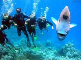 Jew Shoal Dive Site - Geraldton Accommodation