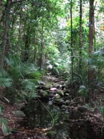 Mossman Gorge Rainforest Circuit Track Daintree National Park - Geraldton Accommodation