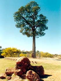 Robbers Tree - Geraldton Accommodation
