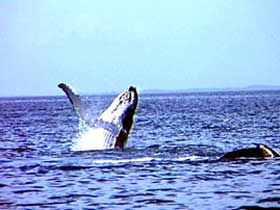 Whale Watching - Geraldton Accommodation