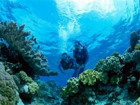 Coral Gardens Dive Site - Geraldton Accommodation