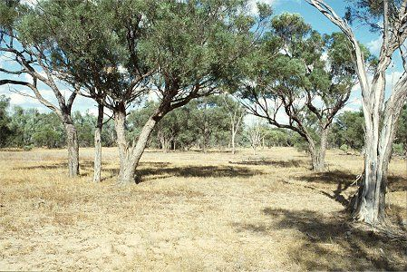 Forest Den National Park - Geraldton Accommodation