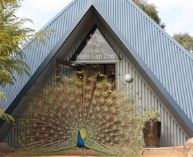 Halls Gap Zoo - Geraldton Accommodation
