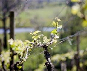 Norton Estate Wines - Geraldton Accommodation