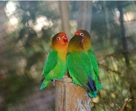 Ballarat Bird World - Geraldton Accommodation