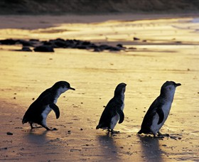 Phillip Island Nature Park - Geraldton Accommodation