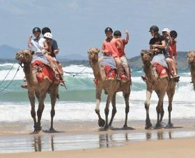 Camel Rides with Coffs Coast Camels - Geraldton Accommodation