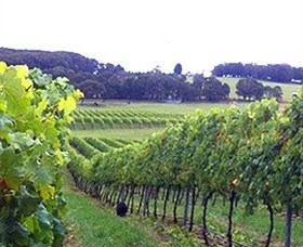 Banjo's Run Winery and Vineyard - Geraldton Accommodation