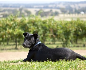 Moothi Estate Vineyard and Cellar Door - Geraldton Accommodation