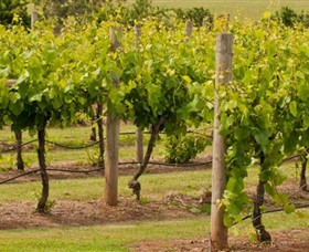 Mt Coghill Vineyard - Geraldton Accommodation