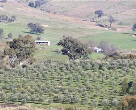 Wymah Organic Olives and Lambs - Geraldton Accommodation