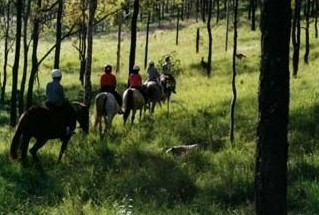 Hunter Valley Horse Riding and Adventures - Geraldton Accommodation