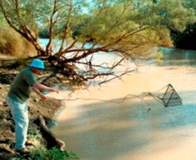 Charleville - Ward River Fishing Spot - Geraldton Accommodation