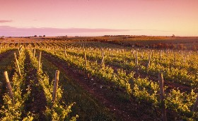 Ralph Fowler Wines - Geraldton Accommodation