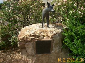 Dingo Statue - Geraldton Accommodation