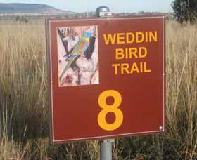 Weddin Bird Trails - Geraldton Accommodation