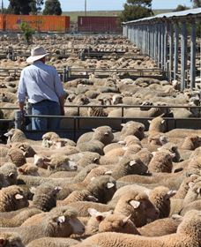 Livestock Marketing Centre - Geraldton Accommodation