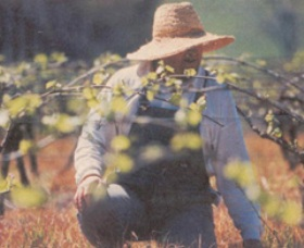 Canobolas Smith Winery - Geraldton Accommodation
